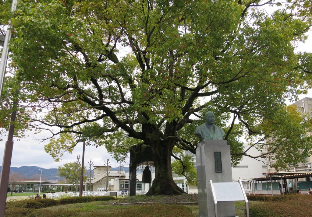 大学の中央の木の画像